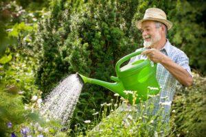 senior man enjoying the health benefits of gardening while watering his plants